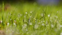 Nourished (serjanburlak) Tags: love nature water vancouver design abundance nourished