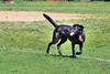 16-05-15_untitled_069 (Daniel.Lange) Tags: dog philadelphia dogs dogdayafternoon spado columbussquarepark