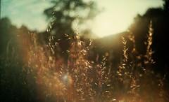 * (Victoria Yarlikova) Tags: 35mm sunset nature pellicola plenka film analog zenit soviet camera scan darkroom traditional process small format expired lomo konica filmisalive light iso100 lomography helios442