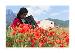 Silvia (Mariano Tais) Tags: girl sony silvia poppies 55 ragazza papaveri fisarmonica a7ii a72 sel5518 sony5518