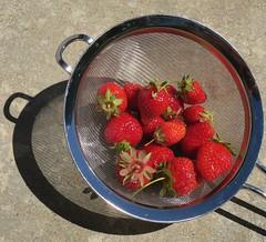 a handful of garden-grown strawberries (Riex) Tags: red food fruits rouge jardin strawberries manger nourriture colander denree chocho homegarden fraises passoire produitfrais g9x
