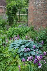 Hostas, Tidebrook Manor (Alan Buckingham) Tags: garden sussex oasthouse tidebrookmanor