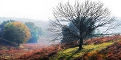 Posbank (Rene Bastiaanssen) Tags: tree colors landscape bomen arnhem herfst boom hills gras posbank silhouet heide landschap kaal kleuren heuvels
