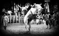 Rafa Cardoso (Eduardo Amorim) Tags: brazil horses horse southamerica brasil criollo caballo cheval caballos cavalos pferde cavalli cavallo cavalo gauchos pferd riograndedosul pampa hest hevonen campanha brsil chevaux gaucho  amricadosul fronteira hst gacho  amriquedusud  gachos  sudamrica suramrica amricadelsur  sdamerika crioulo caballoscriollos criollos jineteada   americadelsud gineteada dompedrito  crioulos cavalocrioulo americameridionale caballocriollo eduardoamorim cavaloscrioulos
