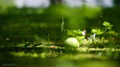 (atacamaki) Tags: summer green nature japan plum fujifilm     xt1 18135mm jpeg atacamaki