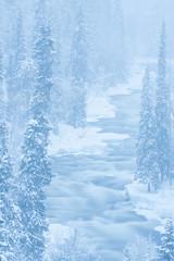 Kitkajoki Aallokkokoski 3491 by Olli Lamminsalo (www.finnature.com) Tags: winter snow finland kuusamo february lumi talvi helmikuu kylm aallokkokoski kitkajoki talvimaisema helmikuu2008 pilvinens