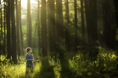 The Forest of Imaginations (Phillip Haumesser Photography) Tags: light boy sunlight playing green nature boys kids forest children fun kid woods child play natural magic adventure imagination magical sunbeams haumesser philliphaumesser