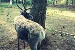Pompéjac - Pinpin et Pilou (4) (Office de Tourisme du bazadais) Tags: et parc pinpin rennes pilou landes gironde animalier bazadais sudgironde girondines pompéjac
