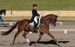 160701_YR_Champs_3659.jpg (FranzVenhaus) Tags: horses performance sydney australia competition event nsw athletes aus equestrian riders dressage siec