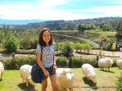 Woman-In-Digital-Dahilayan-Forest-Park-Bukidnon-008 (livingMarjorney) Tags: travels touristspot mindanao bukidnon dahilayanforestpark livingmarjorney womanindigital