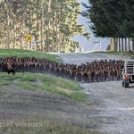 2018 New Zealand-0969 thumbnail
