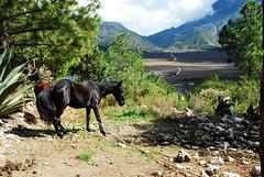 Valle (jacquelineditté) Tags: mexico horse montaña lagunadesánchez nuevoleón jacditté naturaleza animales caballos