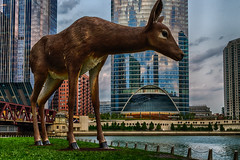 Oh, Deer! (tquist24) Tags: chicago chicagoriver chicagoriverwalk hdr illinois nikon nikond5300 outdoor architecture art artwork bridge city clouds deer downtown geotagged grass lights outside reflection reflections river sculpture sky skyscraper skyscrapers urban water riverwalk
