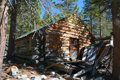 Mahan Cabin - Mammoth Consolidated Mine (simbajak) Tags: mine mining california mammoth consolidated log cabin building wood lodgepole pine trees green