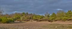 Avondstemming - Holtingerzand (henkmulder887) Tags: holtingerveld holtingerzand natura2000 zwdrenthe drenthe np havelte uffelte natuur natuurgebied zandverstuiving natuurmonumenten staatsbosbeheer sbb vliegden zand wild ree das vos hunebed