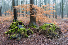 Mossy Copse (Rachel Dunsdon) Tags: 2019 hampshire blackwood forest mossy copse