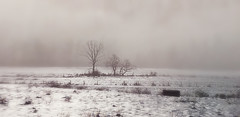 Hazen Road Foggy Morning 2-21-19 1-Final 2 (Javcon117*) Tags: foggy morning fog hazen road cumberland maryland md allegany county western javcon117 frostphotos bw blackwhite trees field pasture hay weeds snow ice rural farm bale