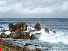IMG_3188 (mudsharkalex) Tags: california pacificgrove pacificgroveca