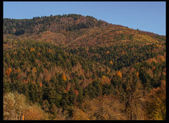 Güz 12 (listera_ovata) Tags: forest tree nature doğa ağaç orman olympusem5 zuiko60mmf28 naturephotography güz autumn fall faunaofanatolia