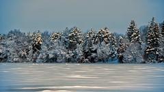 No-One likes another foot of Snow - Untill you see its 'Beauty' (Bob's Digital Eye 2) Tags: bobsdigitaleye bobsdigitaleye2 canon canonefs55250mmf456isstm frozenlake ice march2019 shoreline snow snowscene snowscape trees windowview winter flicker flickr landscape winter2019 winterinmn laquintaessenza