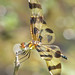 a bubbly Halloween pennant - adult female