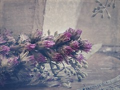 Vacaville Art Gallery Flowers