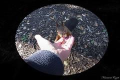 Pour mon ami Hélio Phil (Ezzo33) Tags: france gironde nouvelleaquitaine bordeaux ezzo33 nammour ezzat sony rx10m3 mammifère animal animaux mammifères écureuilroux redsquirrel sciurusvulgaris