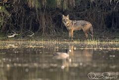 IMG-20171229-WA0023 (TARIQ HAMEED SULEMANI) Tags: sulemani tariq tourism trekking tariqhameedsulemani winter wildlife wild birds nature nikon