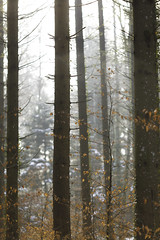 |  || |  | (Marco - MB Photography) Tags: boisdusepey trunk bark tronc feuillesmortes arbre tree albero baum lumiere contrejour dreamforest forestpoetry walkinginnature 6d 135l fastprime shallowdof woods leaves mamuangsuk