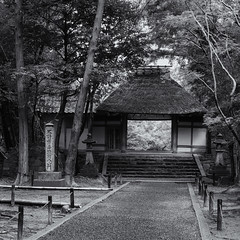 The gateway to Honen-in (Tim Ravenscroft) Tags: path gate woodland honenin temple kyoto japan monochrome blackandwhite blackwhite hasselblad hasselbladx1d