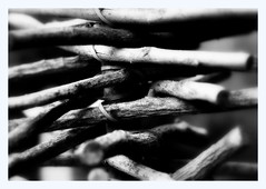 _abstract nature (SpitMcGee) Tags: holz wood gartendekoration gardendecoration abstract nature blackwhite schwarzweiss bokeh macro hmbt spitmcgee