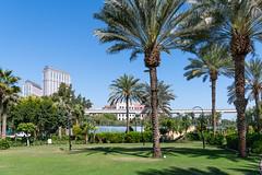 Grand Hyatt Dubai (JarkkoS) Tags: 2470mmf28eedafsvr d850 dubai grandhyattdubaihotel palm park tree uae unitedarabemirates ae