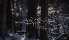 Sparkles and rainbows (Violet aka vbd) Tags: pentax k1ii k1markii hdpentaxda55300mmf4563edplmwrre ct connecticut newengland vbd trees branches ice refraction waterdrops bokeh handheld winter2019 2019 manualexposure trumbull vista landscape woods forest