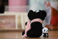 Tiny Pandas and Dog (the.mickey.why) Tags: canon50d canon 50d canonefs55250f456is efs 55250 f456 is