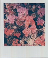 Scan 2 (2) (Emily_sarahd) Tags: polaroids nature naturephotography landscapes flowers colour colourful pink woods forest trees sun