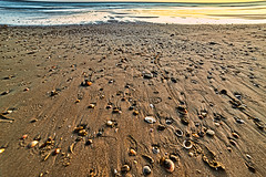 Textura en la playa (frankalf37) Tags: cadiz ccloseup españa natural spain afternoon andalusian beach color concept conch conil landscape nature reflection sand sea seashell shell spring texture turism