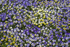 IMG_5591 (Roger Kiefer) Tags: dallas arboretum flowers outdoors beauty nature