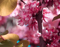 Spring flower (lauracastillo5) Tags: spring flowers flower pink garden outdoors nature natural tree beautiful
