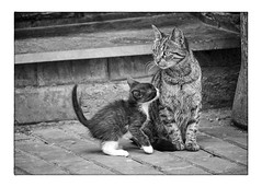 * (Armin Fuchs) Tags: arminfuchs stpetersburg russia cat cats cub tail family diagonal jazzinbaggies