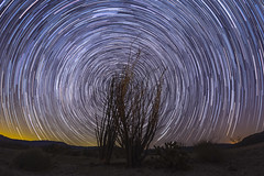 North Star Trails Over a Pair of Ocotillo (slworking2) Tags: julian california unitedstates us anzaborrego anzaborregodesertstatepark stars startrails starstax sandiego desert ocotillo night astronomy sky