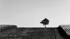 za Raciborzem-46-Edit.jpg (Kamcia666) Tags: natura racibórz zboża pole sierpień landschaft krowiarki pałac