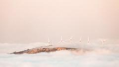 'Early one morning ... ' (Canadapt) Tags: fog mist morning sunrise wind turbine island leiria portugal canadapt