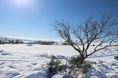 tonto-national-forest-1902230339 (nagerfran) Tags: cactus winter desert storm snow cold freeze arizona scottsdale tontonationalforest