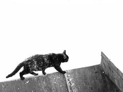 Walking on the Edge (zeevveez) Tags: זאבברקן zeevveez zeevbarkan canon bw cat garbage