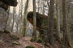 Forest Scheidgen - Luxembourg (roland_tempels) Tags: nature luxembourg forest naturereserve rocks supershot trees scheidgen mullerthaltrail
