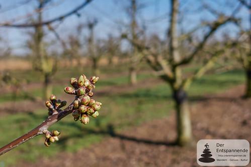 Der Frühling wächst auf dem Mainzer Berg