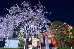 浅草寺 Senso-ji Temple (ELCAN KE-7A) Tags: 日本 japan 東京 tokyo 台東区 taito 浅草 asakusa 浅草寺 sensoji temple ライトアップ イルミネーション illumination ペンタックス pentax k3ⅱ 2019