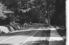 Mount Dandenong Tourist Road (10) (Matthew Paul Argall) Tags: spartus35fmodel400 35mmfilm blackandwhite blackandwhitefilm kentmerepan100 100isofilm road street mountdandenongtouristroad