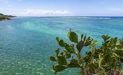 Maconde View Point / Обзорная площадка Маконде (dmilokt) Tags: природа nature пейзаж landscape лес небо облако пальма дерево forest sky cloud palm tree море океан sea ocean скала камень rock dmilokt