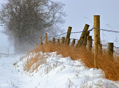 Field Boundary (Dave Snowdon (Wipeout Dave)) Tags: davidsnowdonphotography canoneos80d landscape fence snow barbedwire grass winter northyorkshire